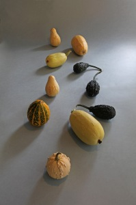 G Forss Gourds from Jack's Ginofor Garden 2014 small file