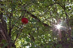 G Forss  The Last Apple on the Tree small file