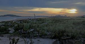 G Forss  Audubon Preserve at Plum Island 7 vertical stitch copy small file paint