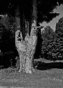 G Forss  Large Oak Tree  165mm copy new fix all nature