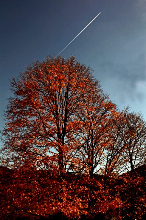 G Forss Leaf peeping Flight to Europe best smaller size
