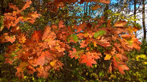 g-forss-fall-leaves-last-stand-small-file