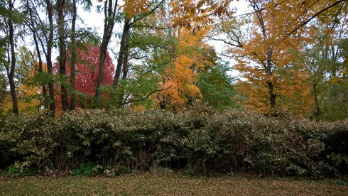 g-forss-red-and-orange-trees-behind-the-laundormat-2-small-f