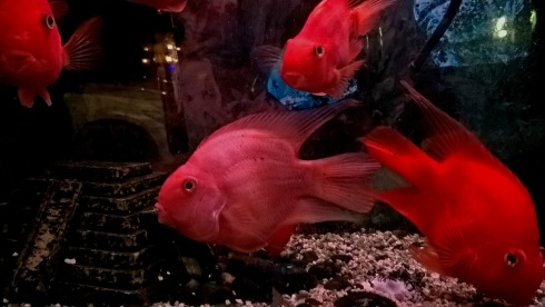 g-forss-25-nyc-fish-in-storefront-window-small-file