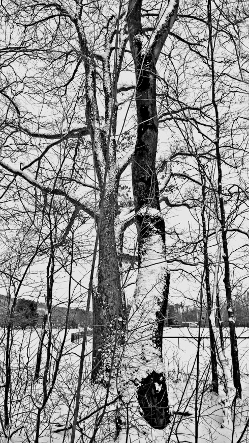 G Forss Spiritually entangled trees small file